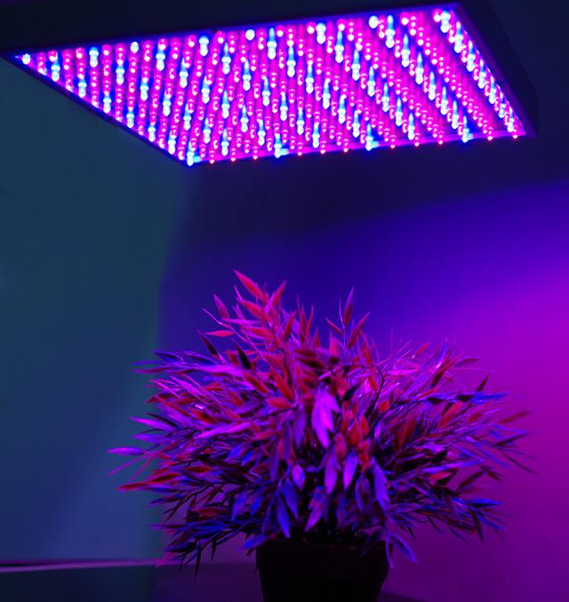 wachstumslampe pflanzenlampe pflanzenlicht pflanzenleuchte rot blau 225 leds 15w ebay. Black Bedroom Furniture Sets. Home Design Ideas